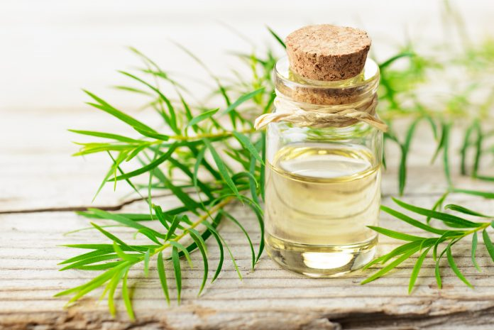 A comprehensive guide to tea tree oil